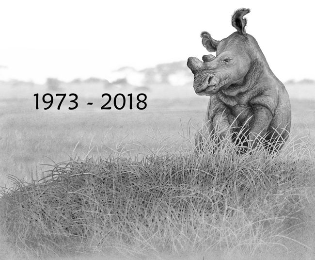 The Last White Rhino - Click to Return to Gallery