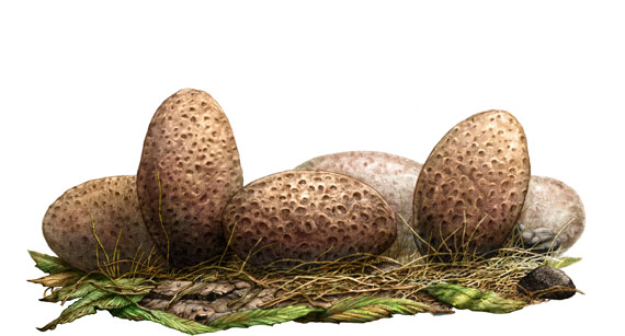 Dinosuar Eggs - Click to Return to Gallery